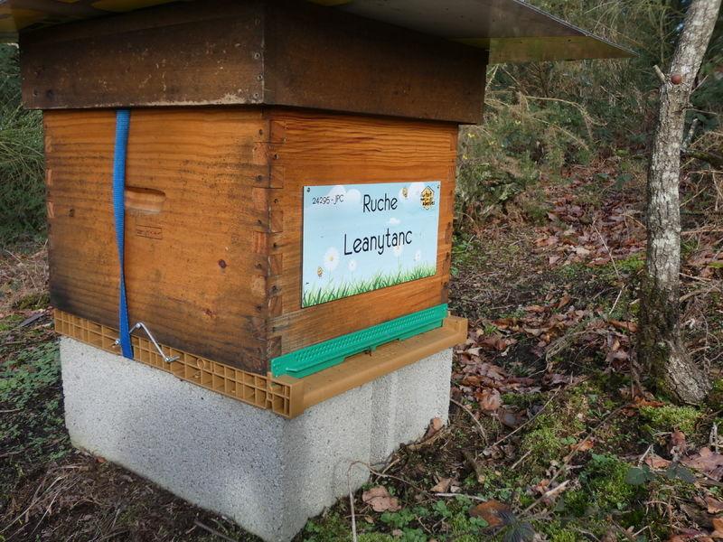 La ruche Leanytanc