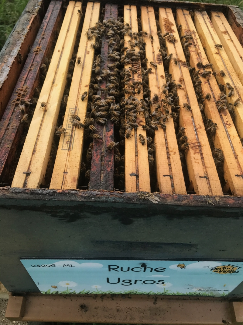 La ruche Ugros