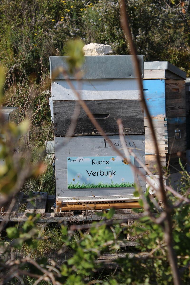La ruche Verbunk