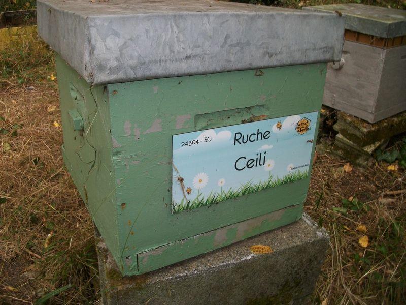La ruche Ceili