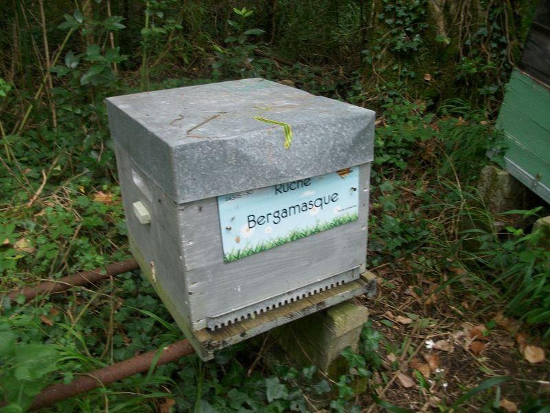 La ruche Bergamasque