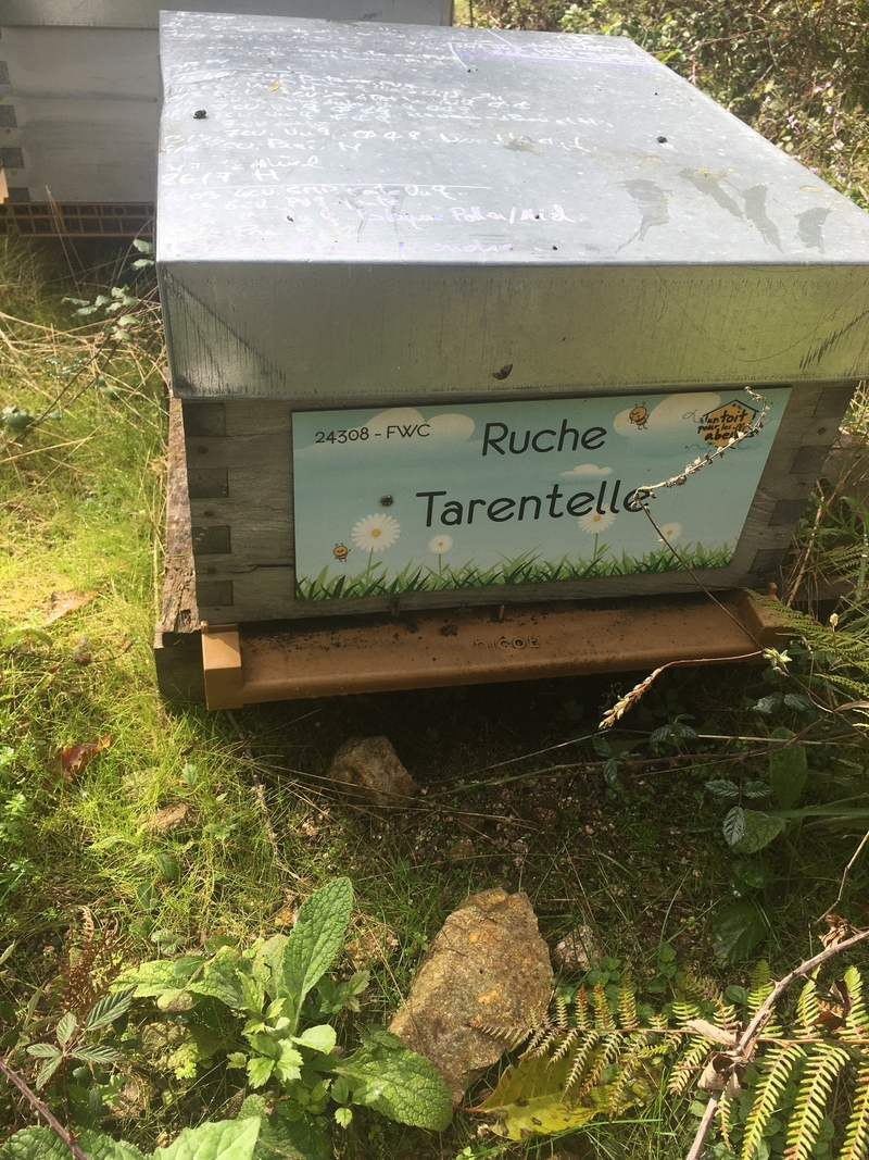 La ruche Tarentelle
