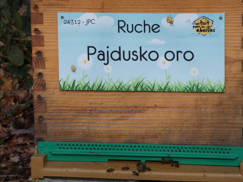 La ruche Pajdusko oro