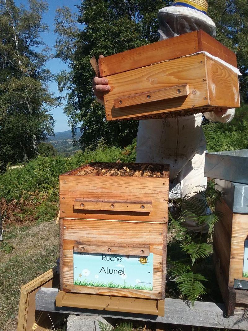 La ruche Alunel