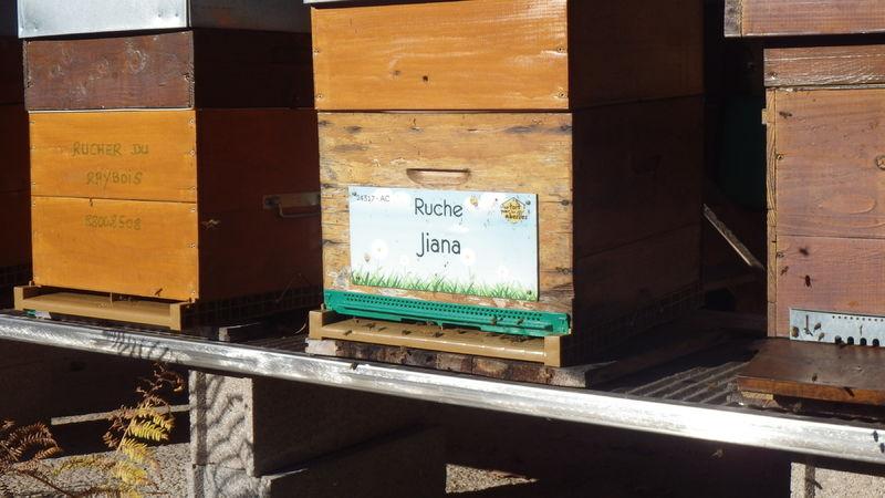 La ruche Jiana