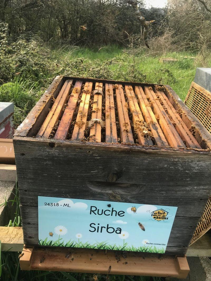 La ruche Sirba