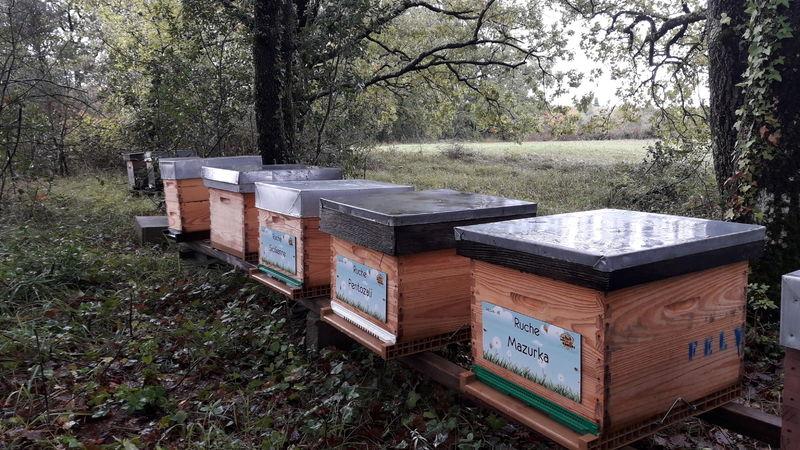 La ruche Mazurka