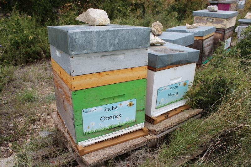 La ruche Oberek