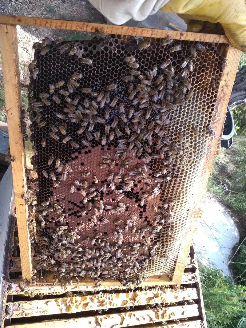 La ruche Polka
