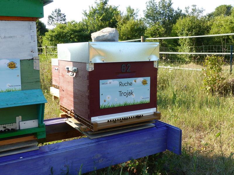 La ruche Trojak