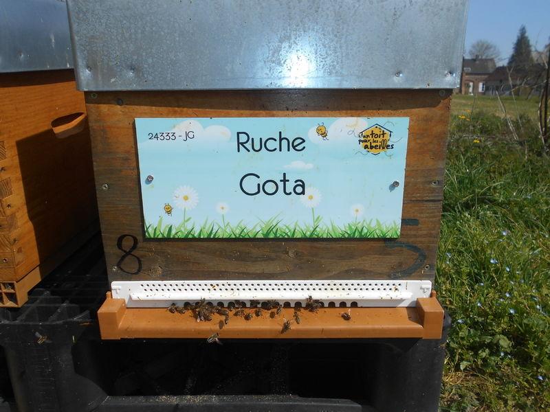 La ruche Gota