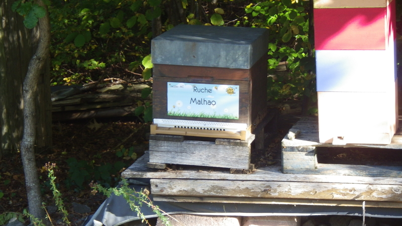 La ruche Malhao