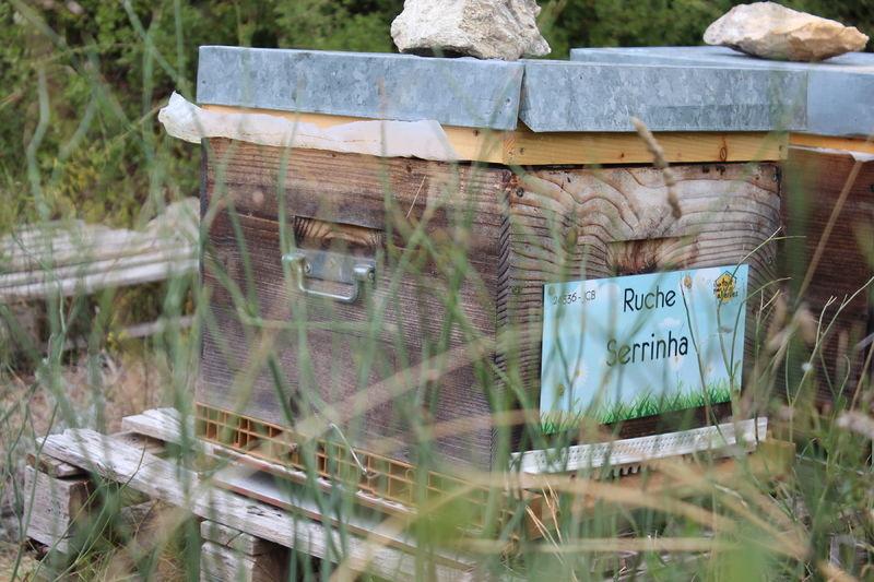 La ruche Serrinha
