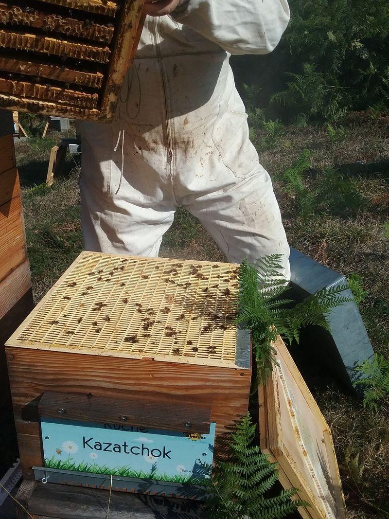 La ruche Kazatchok