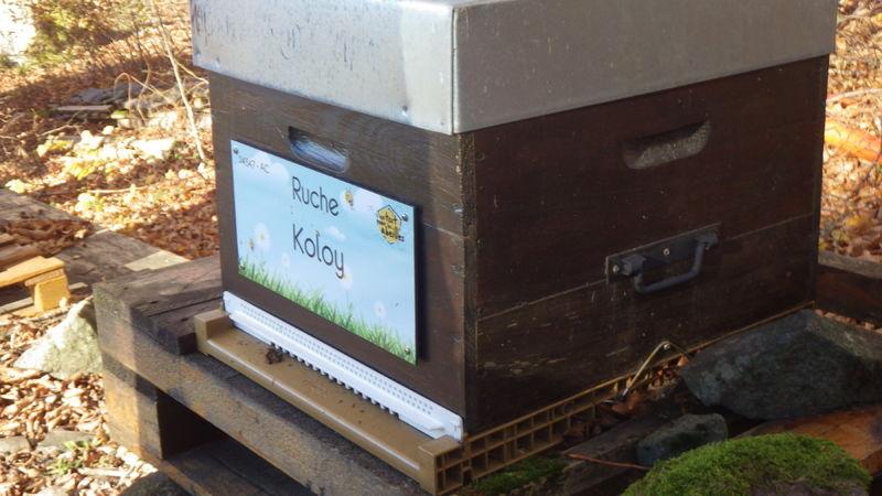 La ruche Koloy