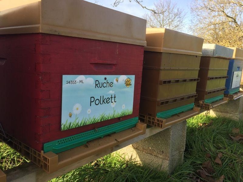 La ruche Polkett