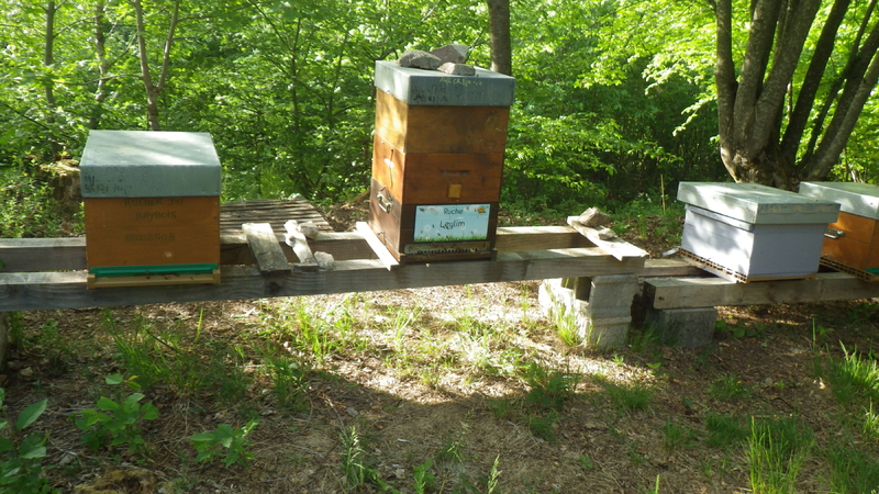 La ruche Leylim