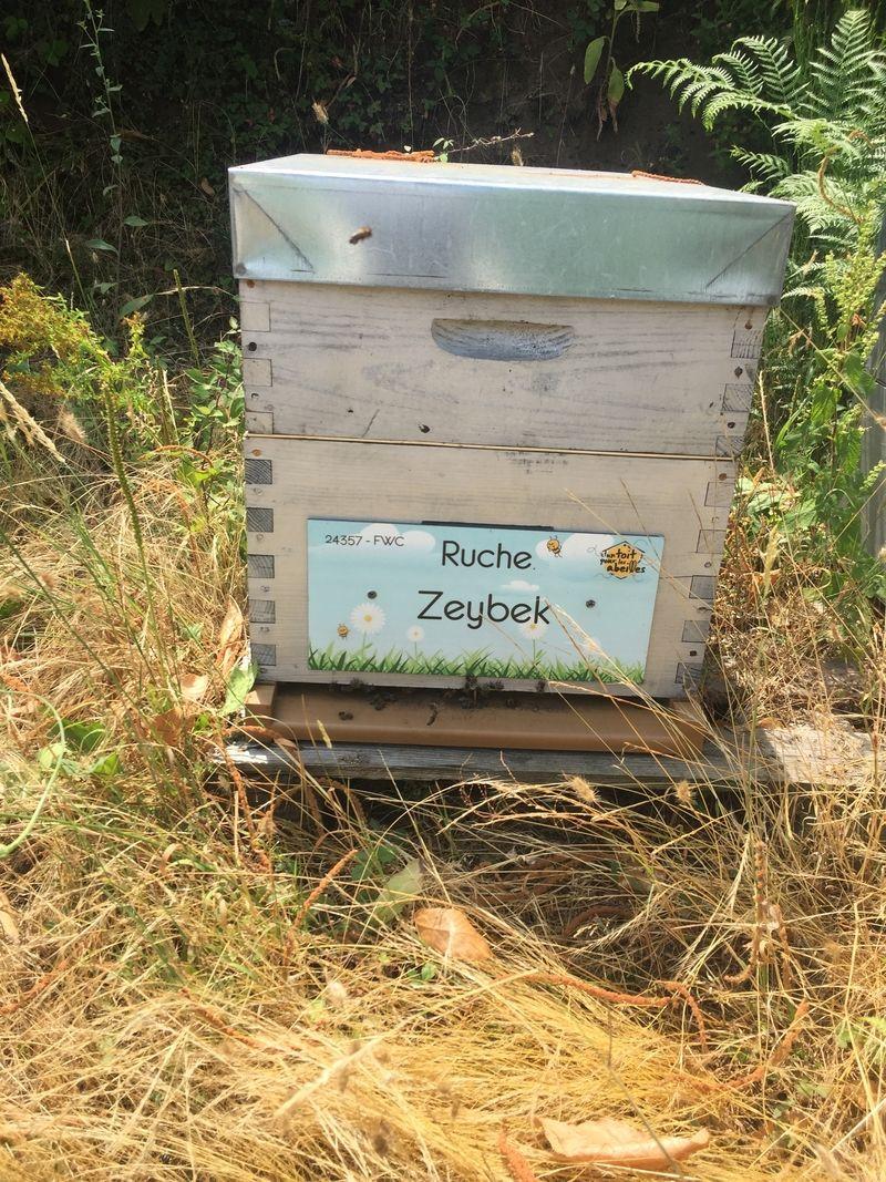 La ruche Zeybek