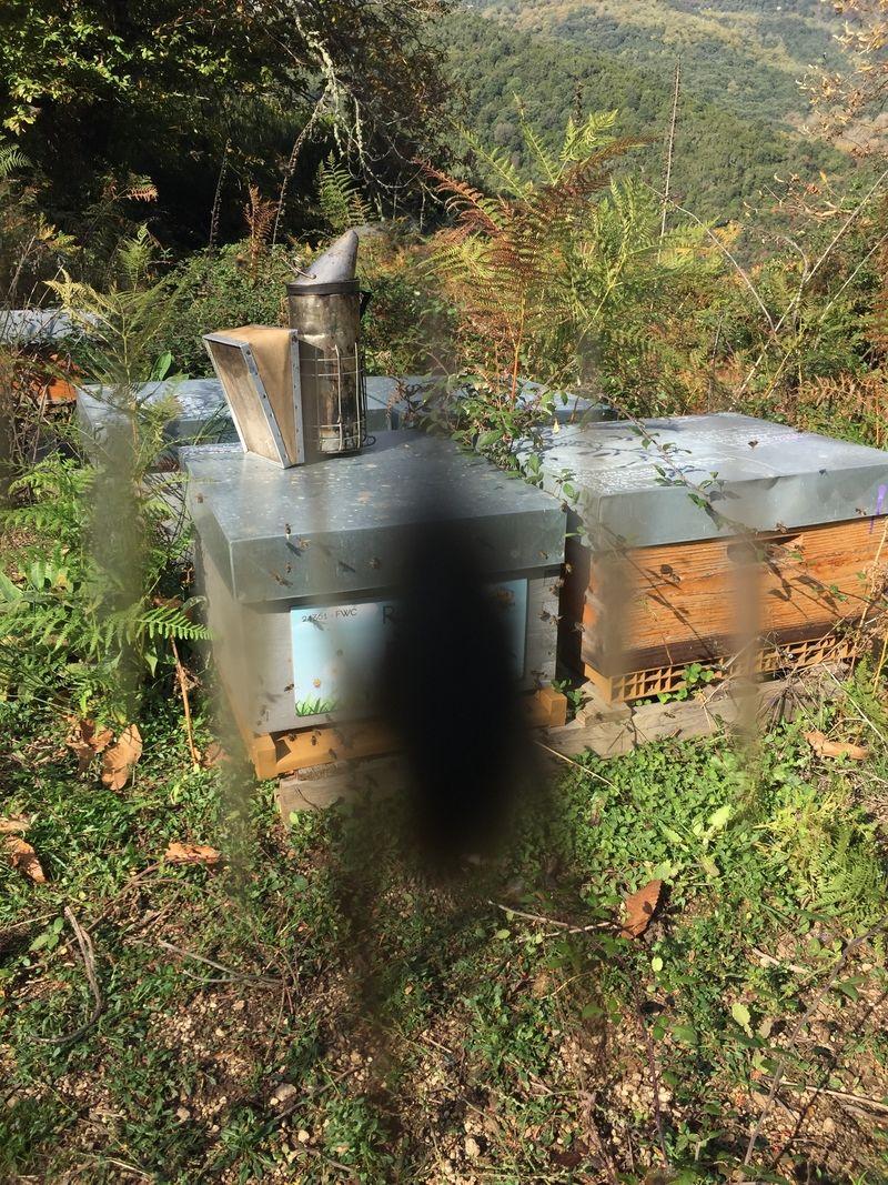La ruche Pilou