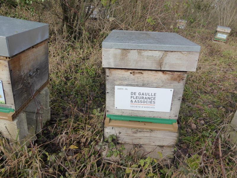 La ruche DE GAULLE FLEURANCE & ASSOCIES