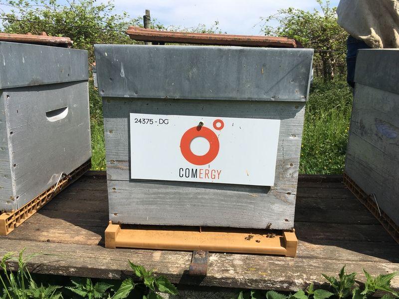 La ruche COMERGY