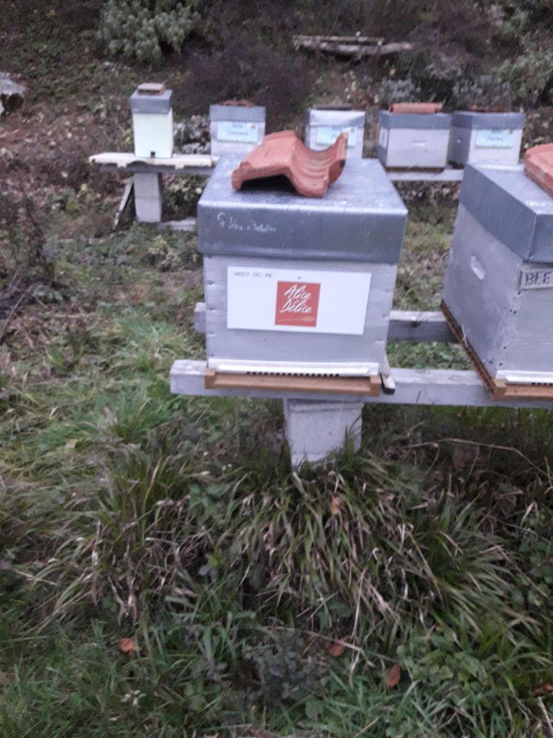 La ruche Alice Délice Lyon
