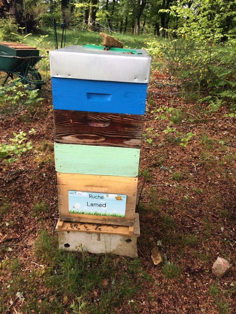 La ruche Lamed