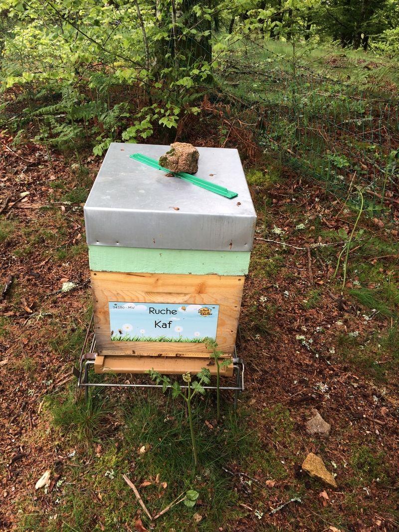 La ruche Kaf