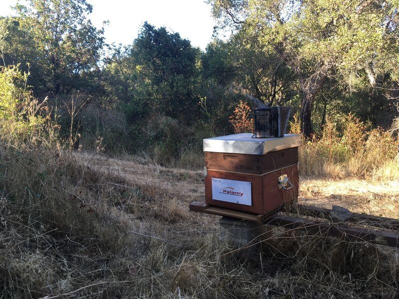 La ruche PALAMY