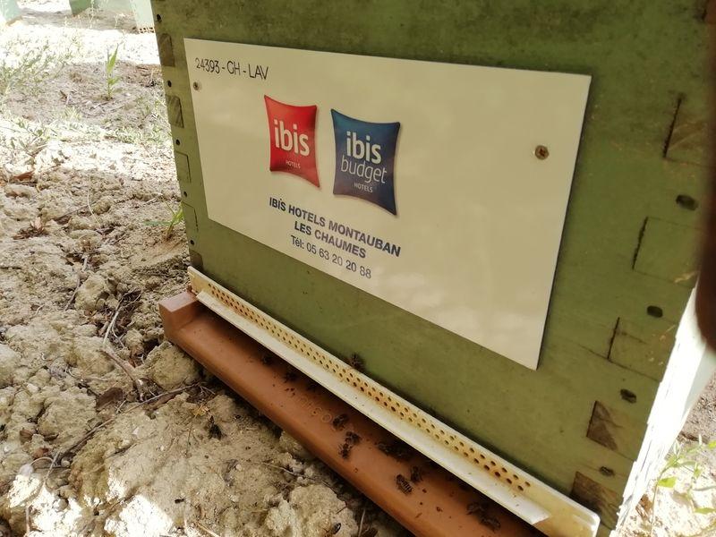 La ruche SAS LE CASTEL IBIS MONTAUBAN