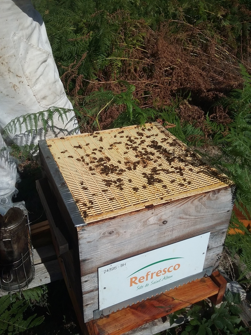 La ruche Refresco