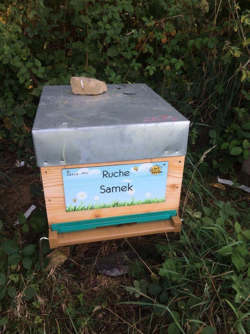La ruche Samek