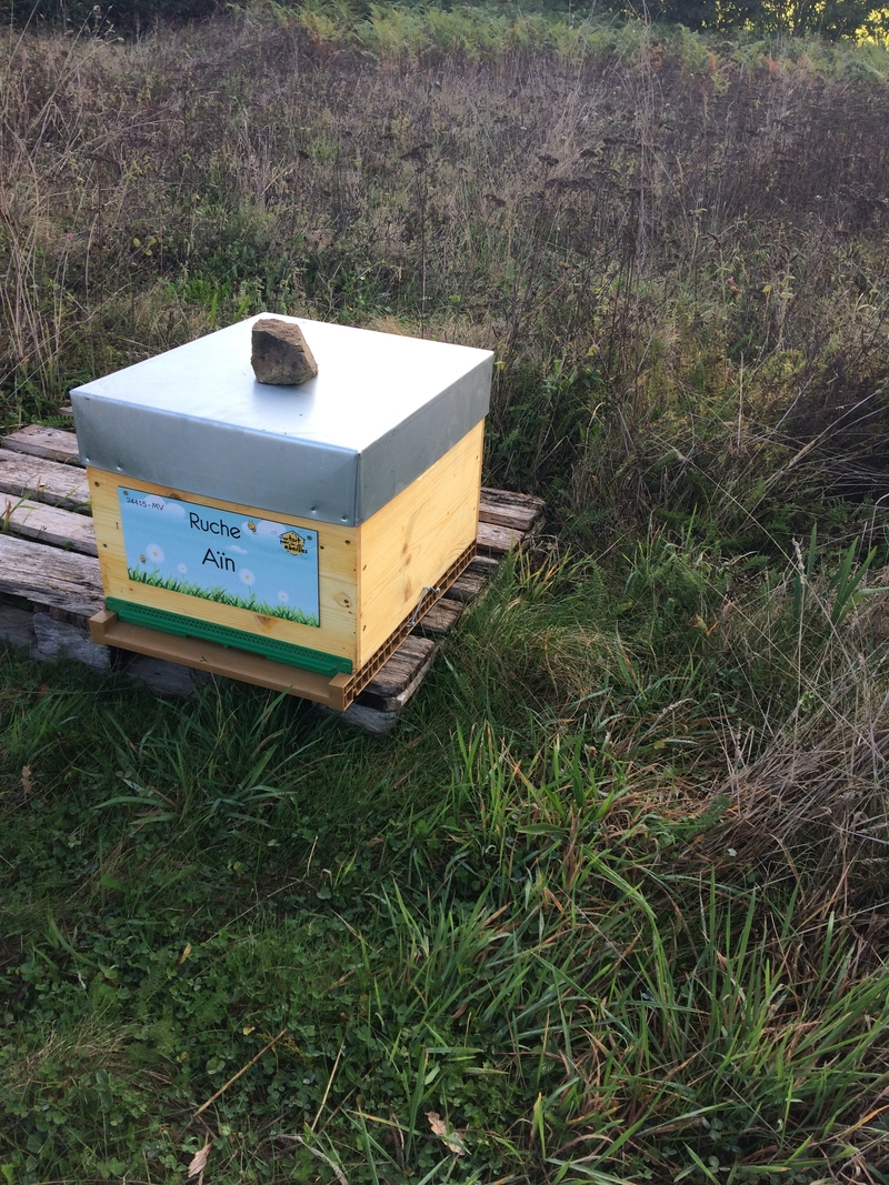 La ruche Aïn