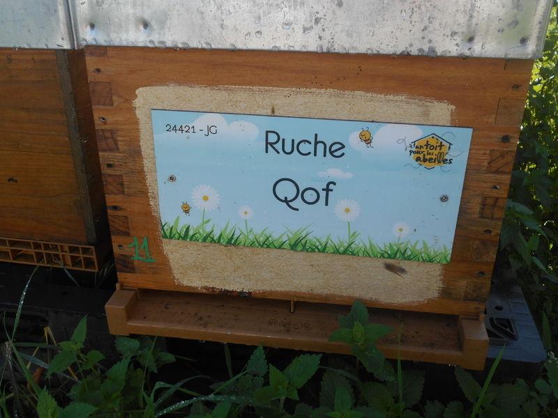 La ruche Qof