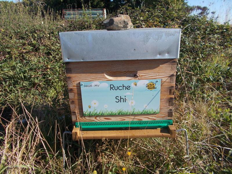 La ruche Shi