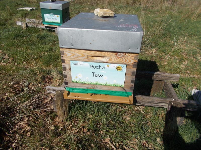 La ruche Taw