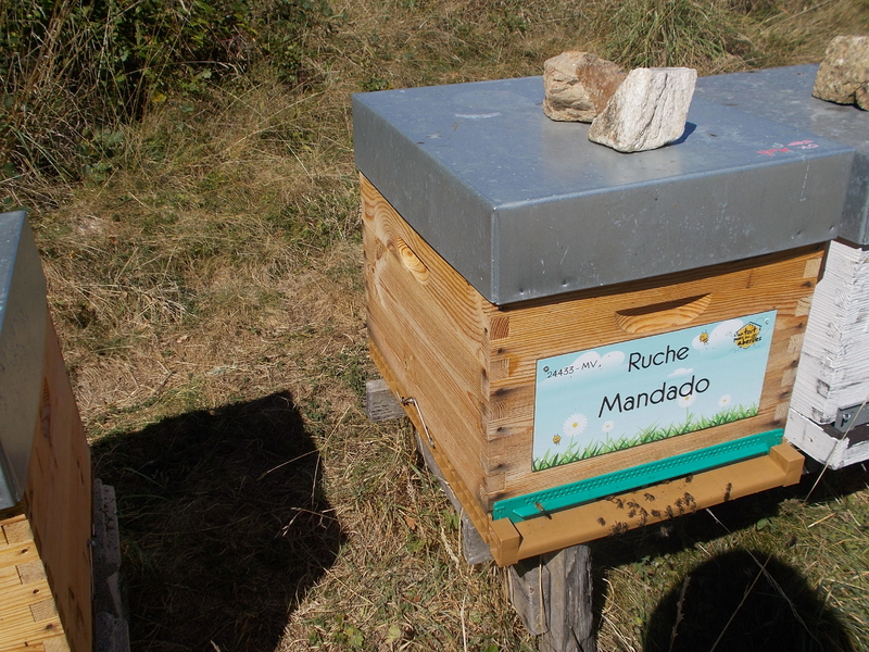 La ruche Mandado