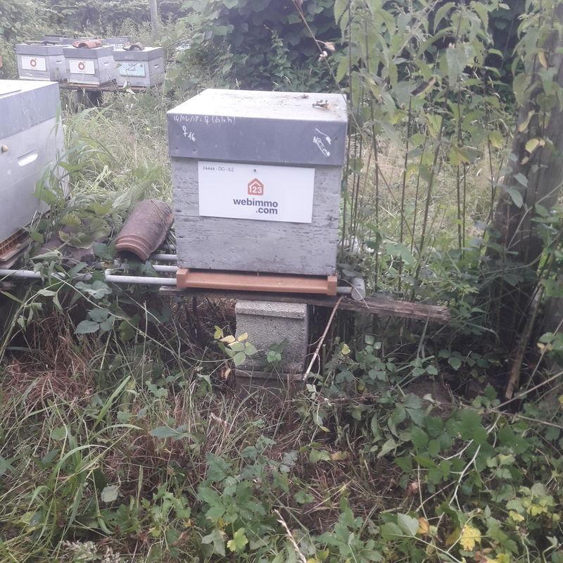 La ruche 123webimmo vienne et ses environs.