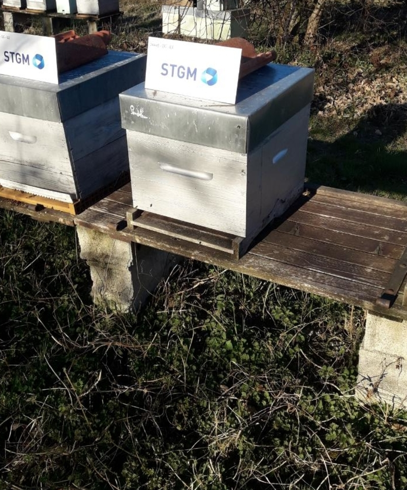 La ruche STGM