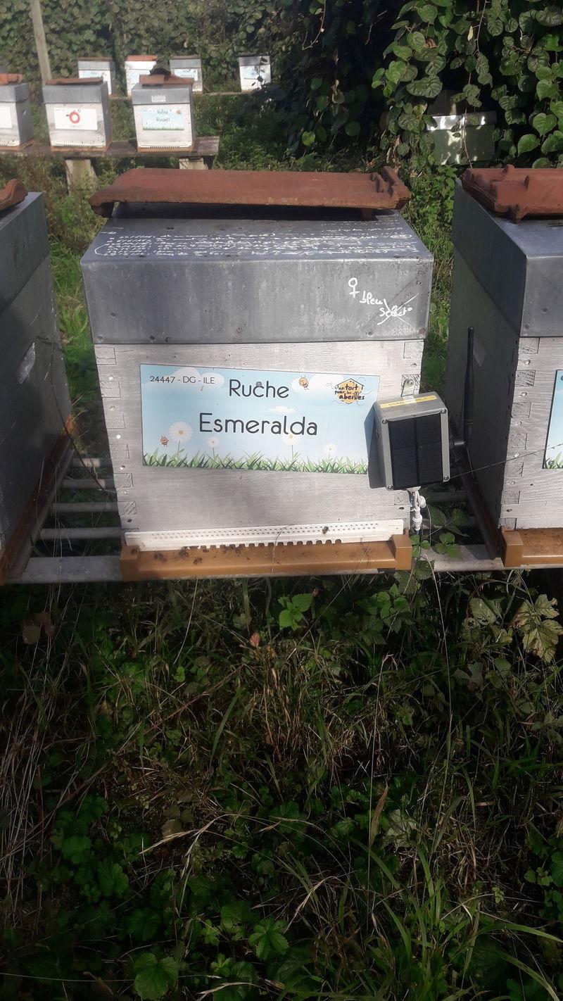 La ruche Esmeralda