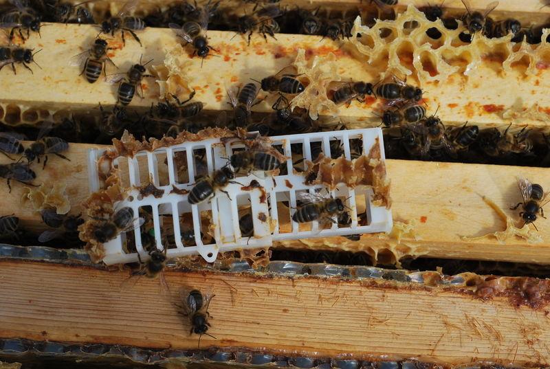 La ruche  Dame aux camélias