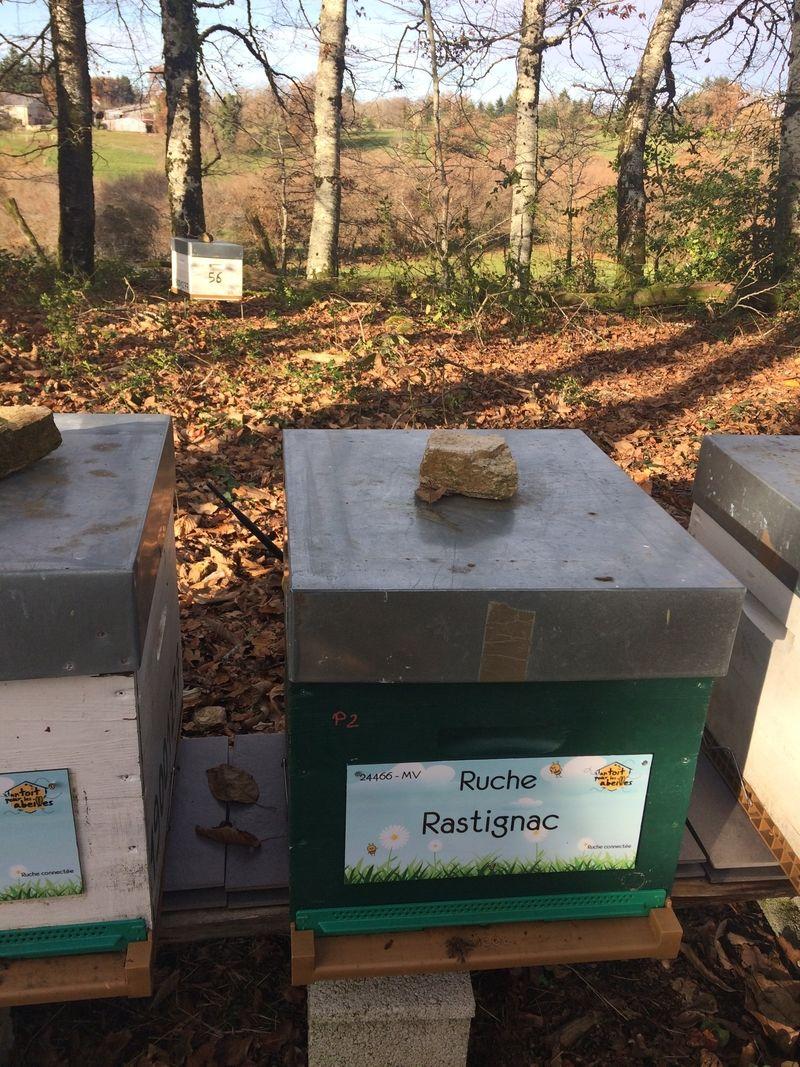 La ruche Rastignac