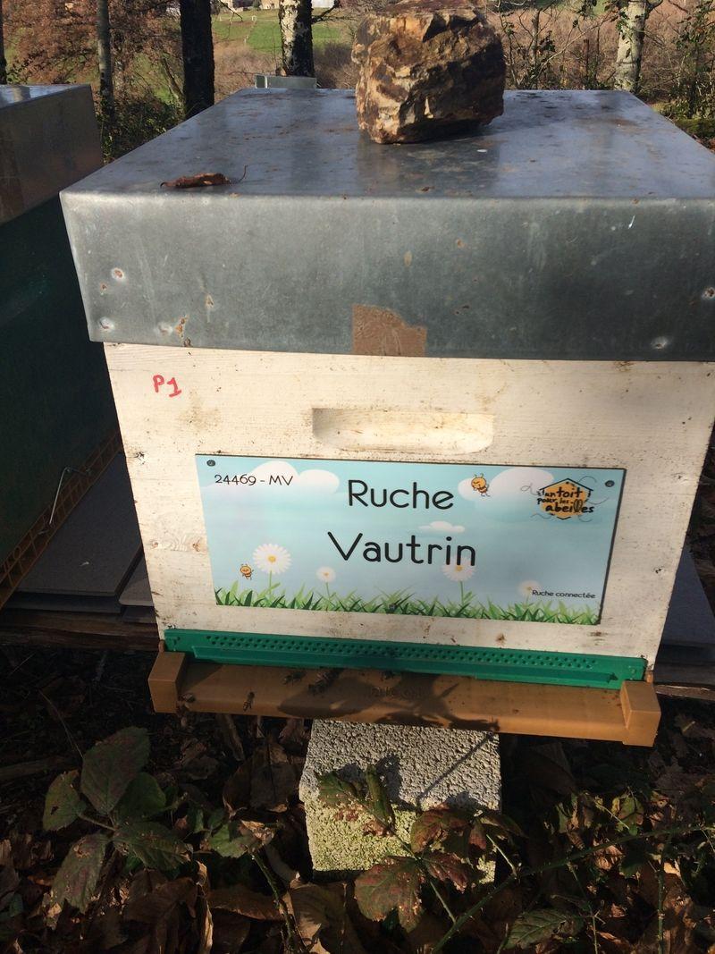 La ruche Vautrin
