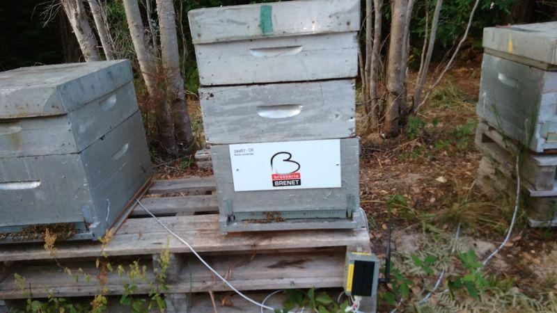 La ruche BROSSERIE BRENET