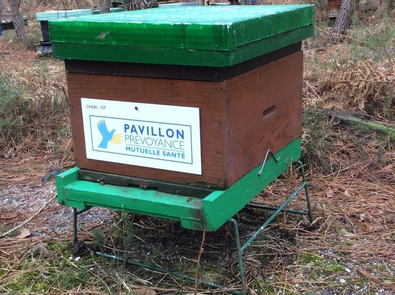 La ruche PAVILLON PREVOYANCE