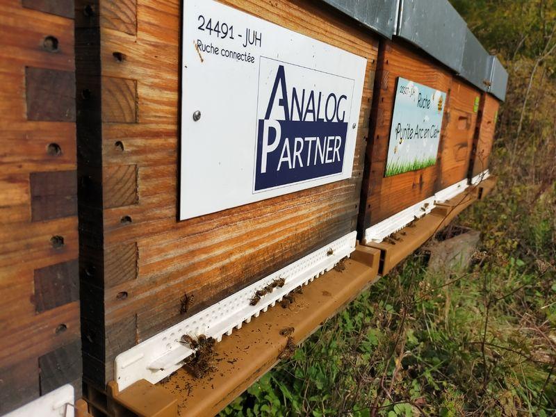 La ruche ANALOG PARTNER