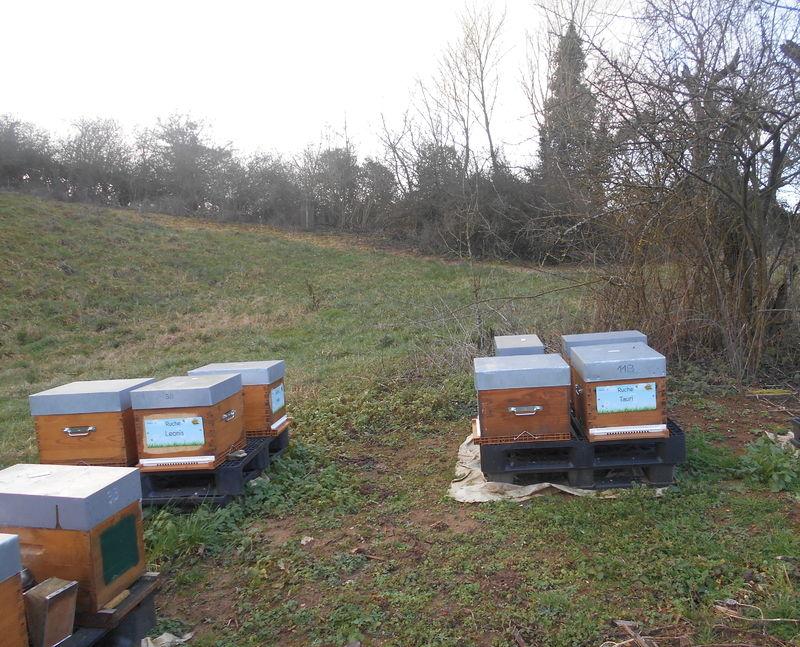 La ruche Tauri