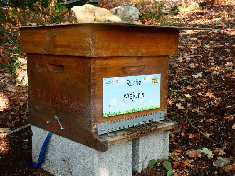 La ruche Majoris