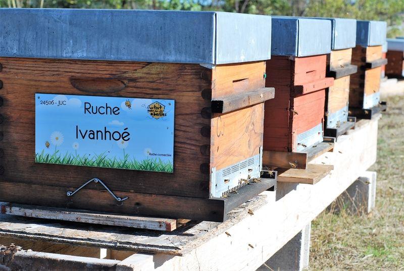 La ruche Ivanhoé