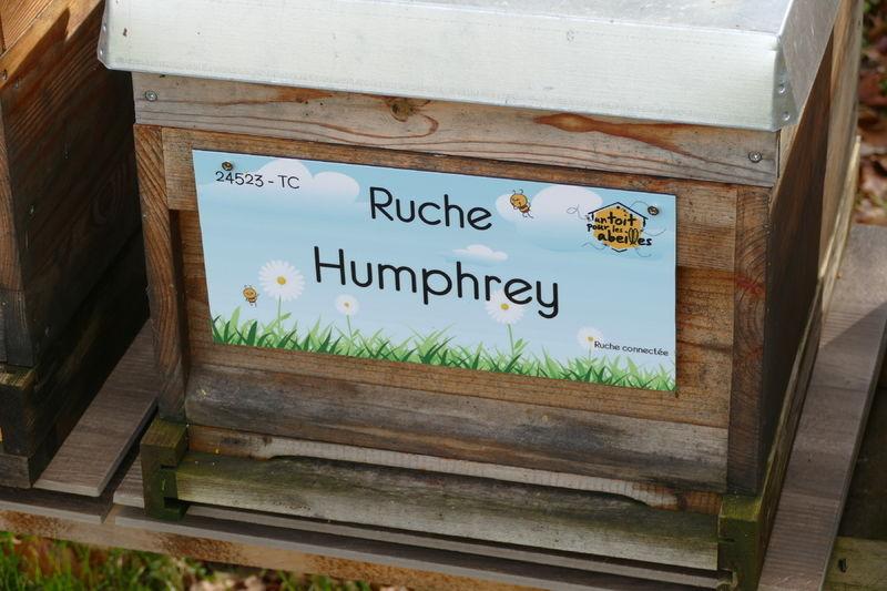 La ruche Humphrey